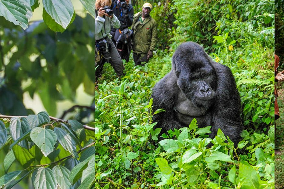 Activities To Do In Bwindi Impenetrable National Park