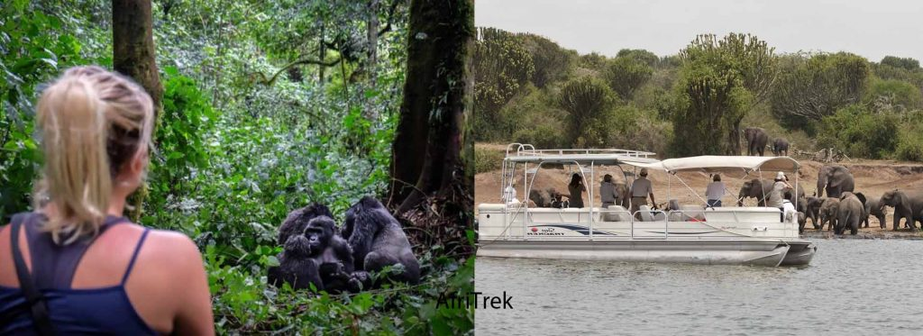 5 Days Gorilla Trekking and Wildlife Safari | Gorilla Trekking in Bwindi